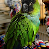 Arizona Exotic Bird Rescue : Arizona Exotic Bird Rescue, Inc. is a non-profit avian rescue dedicated to the rescue, rehabilitation, retirement, and placement of companion parrots.